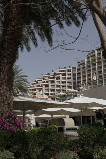Outdoors Architecture Building Exterior Palm Tree No People City Hotels Area Travel Destinations Eilat Israel