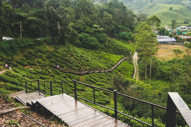 Tree Plant Railing Nature Beauty In Nature Green Color Day Mountain Tranquility Scenics - Nature High Angle View No People Growth Architecture Landscape Environment Built Structure Tranquil Scene Forest Land Outdoors Green Color Green Tea Tea Leaves Tea Leaf Tea Leaves Background Farm