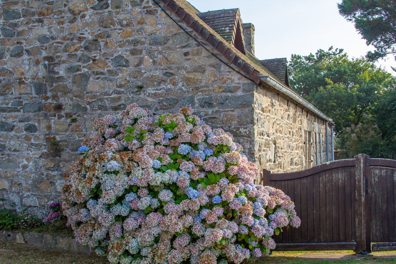 FLOWERS ON WALL OF HOUSE