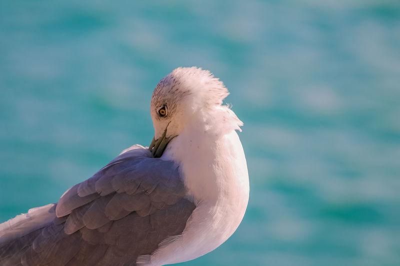 Close-up of bird preening