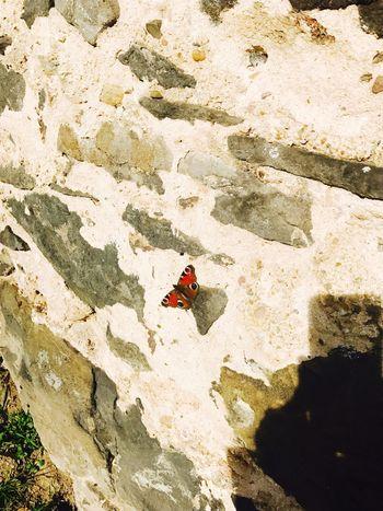Butterfly Schönes Wetter Love Spring Wochenende Liebe Love ♥