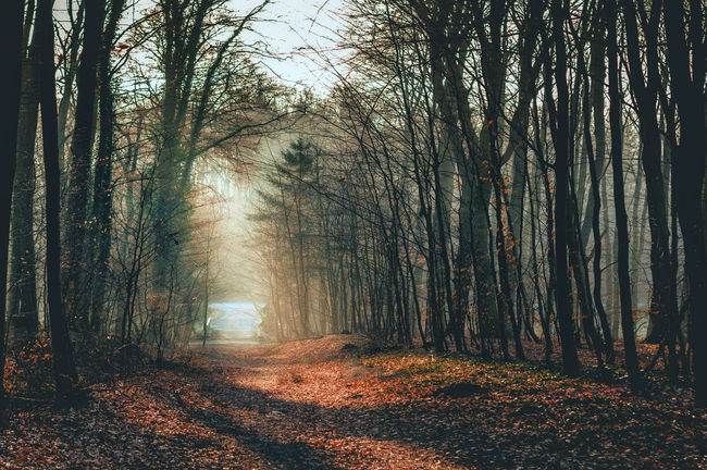 Morning Woodland moments in Herford, Germany, March 2k18. EyeEm Best Shots EyeEm Nature Lover EyeEmNewHere Natural Natural Beauty Nature Nature On Your Doorstep Nature Photography WoodLand First Eyeem Photo Forest Forest Fire Forest Photography Forestwalk Germany Moody Moody Atmosphere Moody Morning Moody Nature Moodygrams Mornings Nature_collection Naturelovers Naturephotography Sunrise