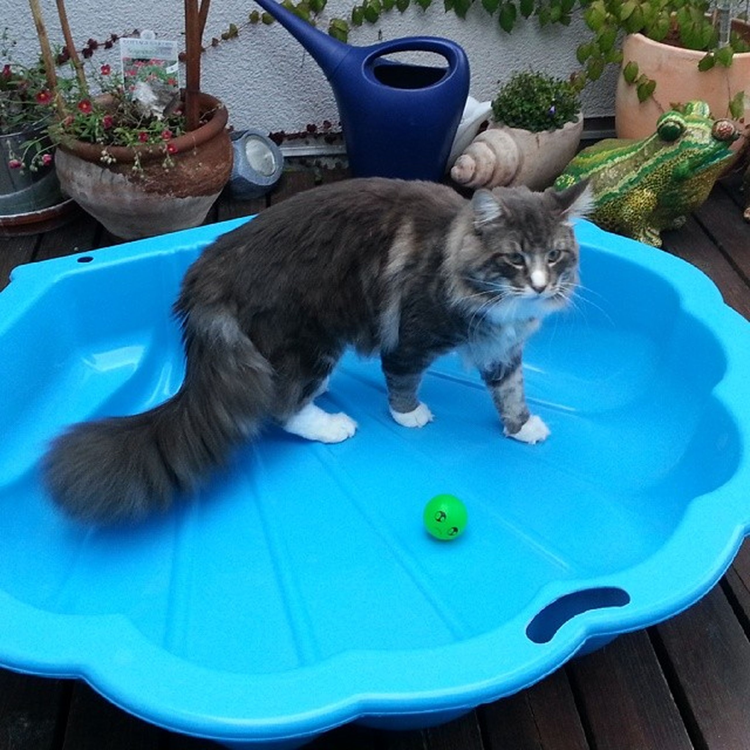 pets, one animal, domestic animals, animal themes, mammal, domestic cat, cat, high angle view, relaxation, feline, chair, sitting, full length, blue, swimming pool, table, lying down, resting, no people, indoors