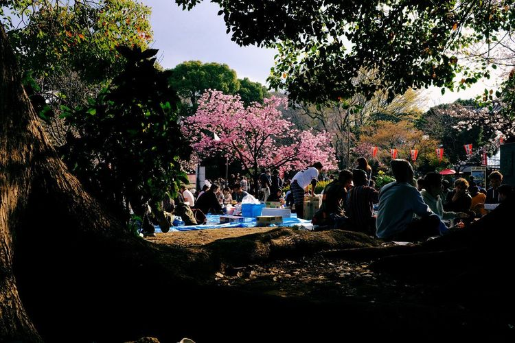 Tree Plant Group Of People Real People Large Group Of People Crowd Nature Growth Men Women Flower Day Outdoors Lifestyles Park Flowering Plant Adult Freshness Blossom Springtime Cherry Blossom Sakura Hanami