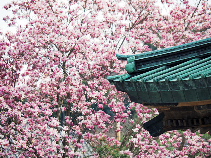 Cropped Image Of Traditional House By Cherry Tree