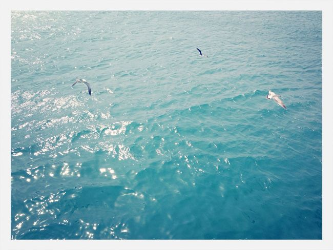 Seagull Sea Traveling Good Times