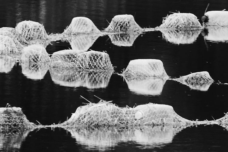 Water Lake Black And White Floating On Water Floats Jewel Like Jewels Reflections Abstract Original Experiences The Innovator Showcase June The OO Mission Fine Art Photography Monochrome Photography Welcome To Black Art Is Everywhere TCPM BYOPaper! End Plastic Pollution