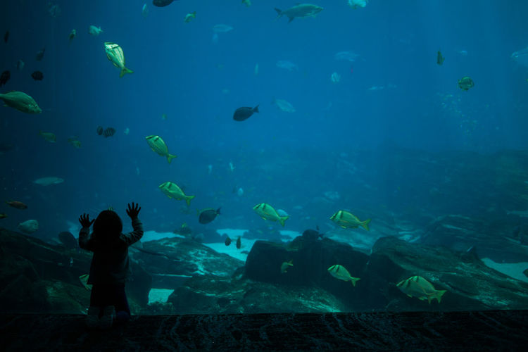 Man swimming in aquarium
