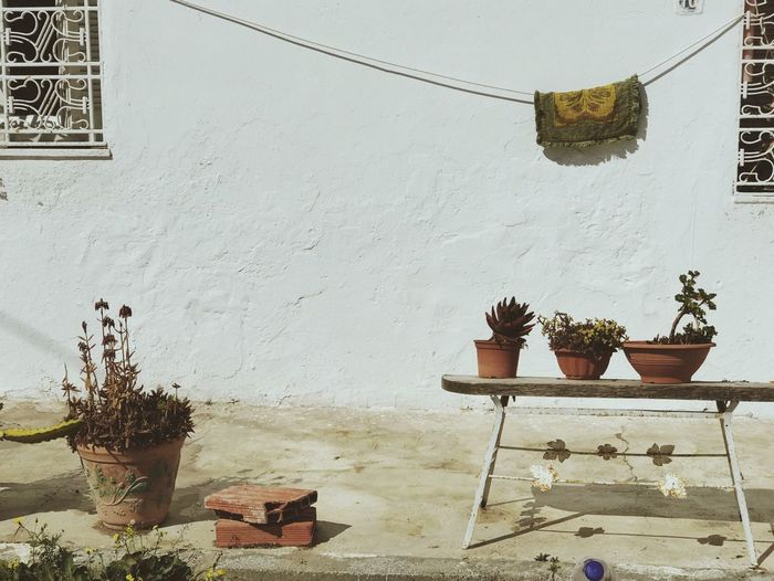 Potted plants on table against wall and house