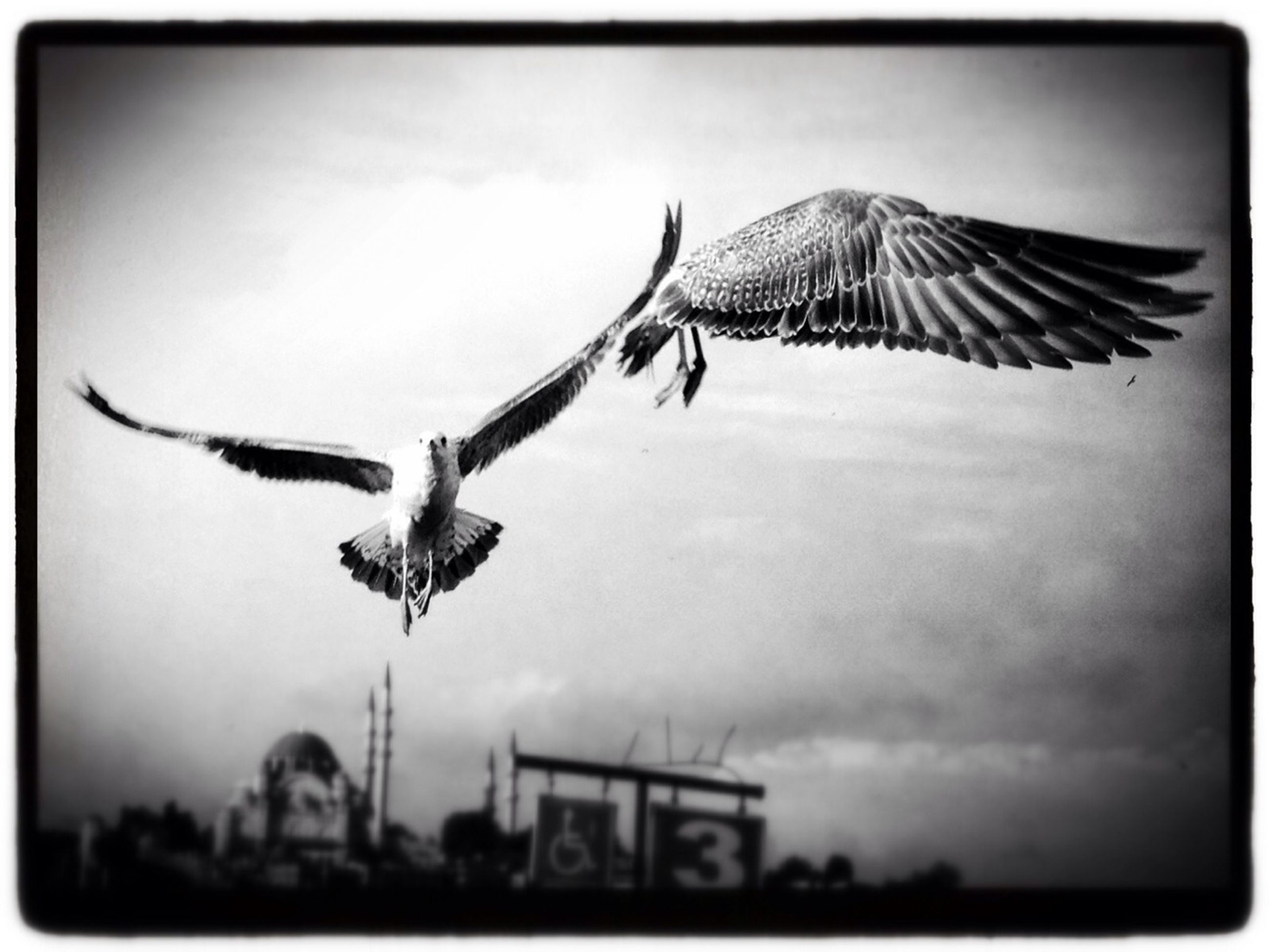 transfer print, animal themes, flying, bird, animals in the wild, spread wings, wildlife, auto post production filter, one animal, sky, low angle view, mid-air, seagull, motion, animal wing, day, full length, nature, cloud - sky, outdoors