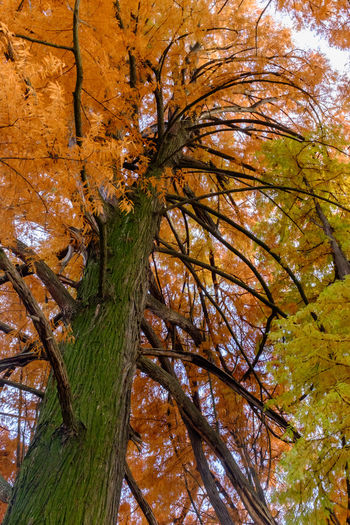 Autumn Backgrounds Beauty In Nature Branch Close-up Day Growth Leaf Low Angle View Nature No People Outdoors Sky Tree Tree Trunk