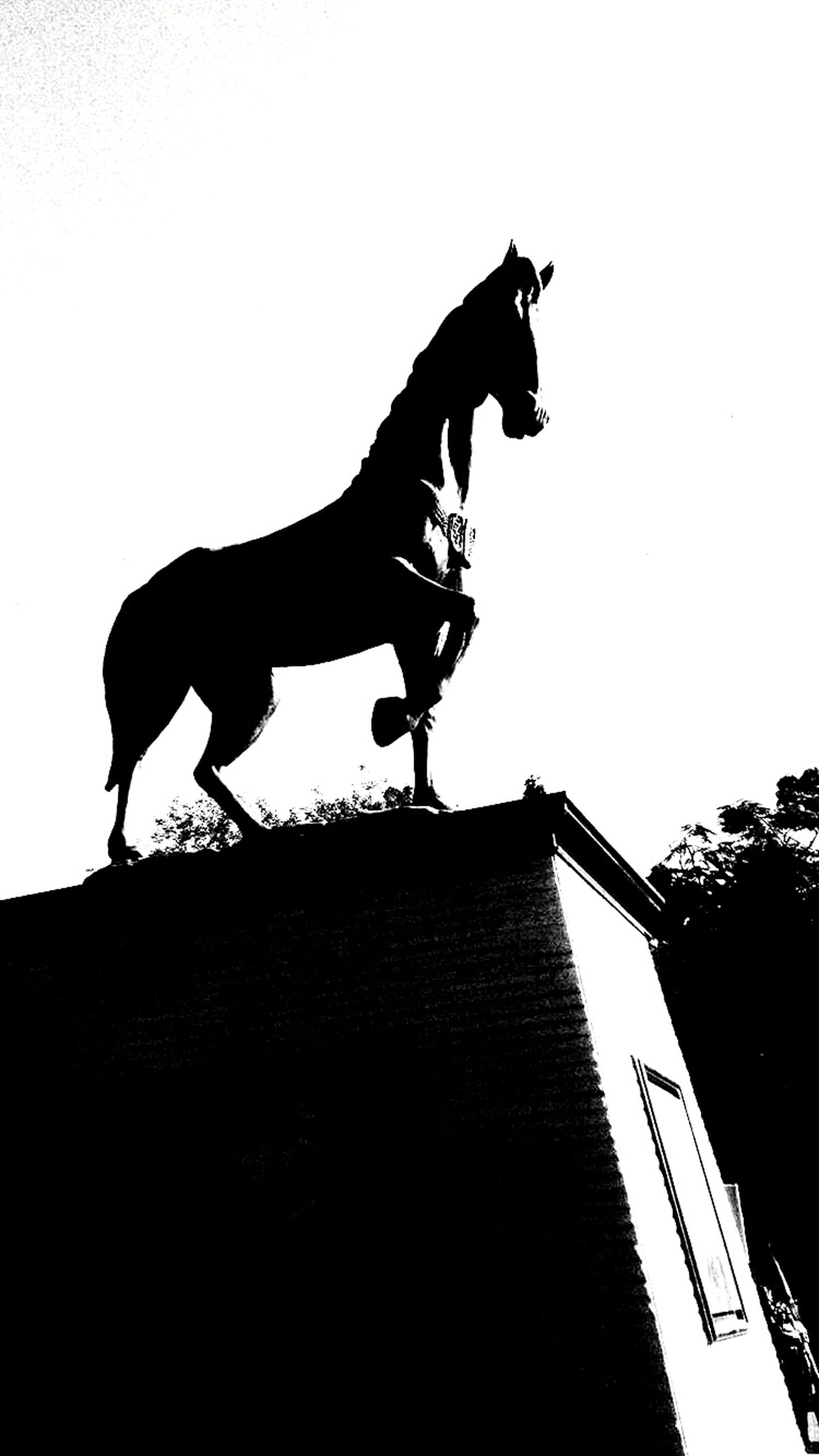 horse, silhouette, built structure, low angle view, outdoors, statue, sculpture, day, no people, rooster