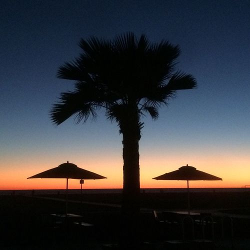 No Filter Palm Trees Sunset Magic Hour Umbrellas UFO Sightings UFO