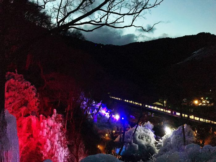 氷柱 Night Tree