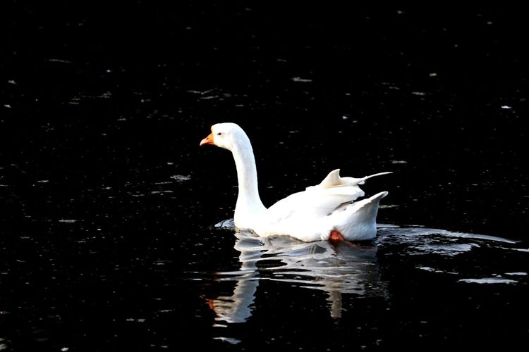 🦆#water Water