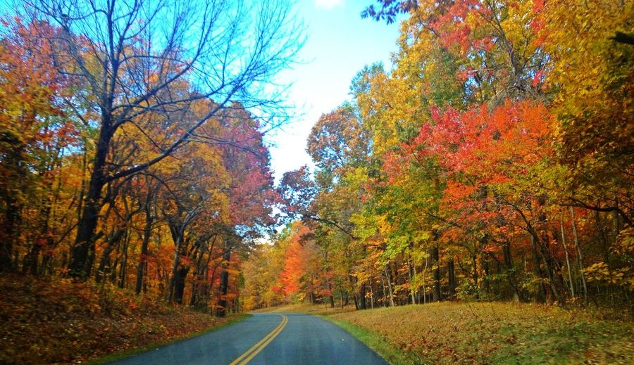 Autumn Change Day Diminishing Perspective Drive Fall Leaves Nature No People Perspective Road Season  The Way Forward Tranquil Scene Tree Vanishing Point