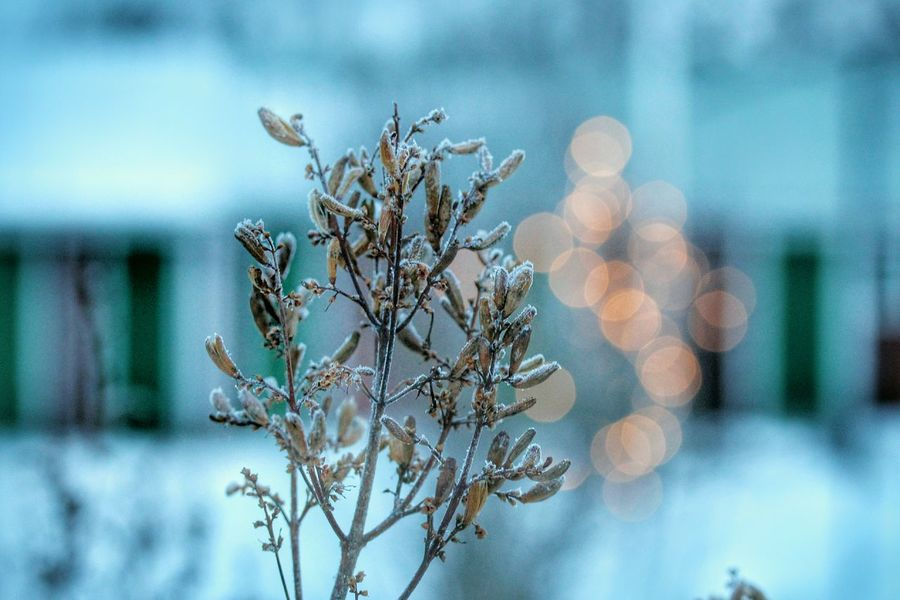 It's Cold Outside Frosty Frost Freezing Cold Freezing Cold Nature Bookeh Outdoor Winter Wintertime White Beautiful Beauty Sweden Europe