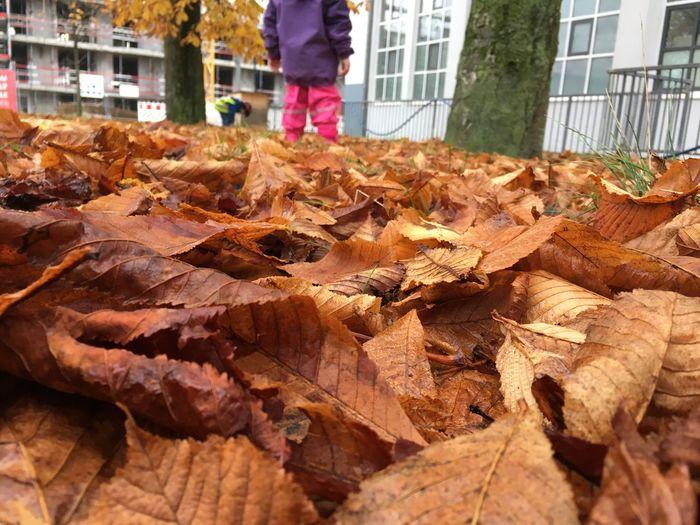 Leaf Outdoors