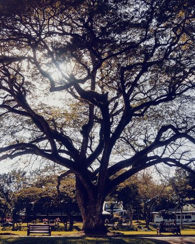 University of the Philippines, Los Banos #eeyemphotography EyeEm Best Shots - Nature Tree Growth Shadow Day Nature Outdoors Branch No People Beauty In Nature Sky