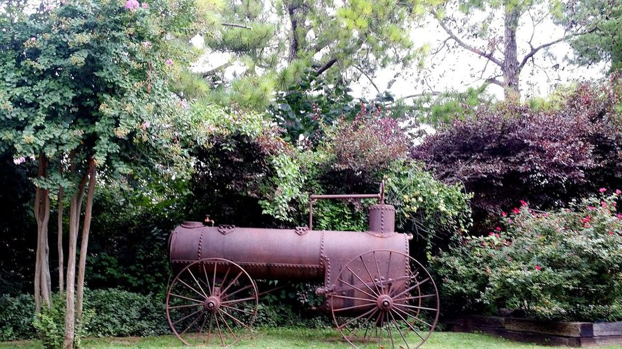 Tree Growth Green Color Nature No People Beauty In Nature Outdoors Plant Day Train Rustic Rusted Roses Rose Garden Freshness Pine Tree Railroad Ties