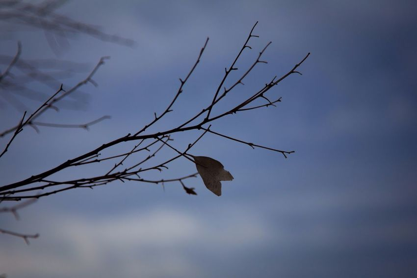 https://youtu.be/NcEZEWeNTOY Sky Nature Bare Tree Tree EyeEm Gallery Eye4photography  Mllml Getting Inspired Canon Selfportrait EyeEm EyeEmBestPics Autumn Leaves Altro, Oltre