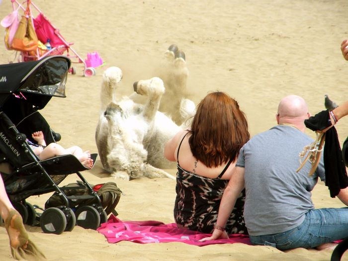 now that's something you don't see every day..... Beach Beach Life Casual Clothing Day Donkey Donkey Rides Family On Beach Leisure Activity Lifestyles Mammal Outdoors Part Of Sand Seaside Summer Summer Holidays Summer Time  Vacation