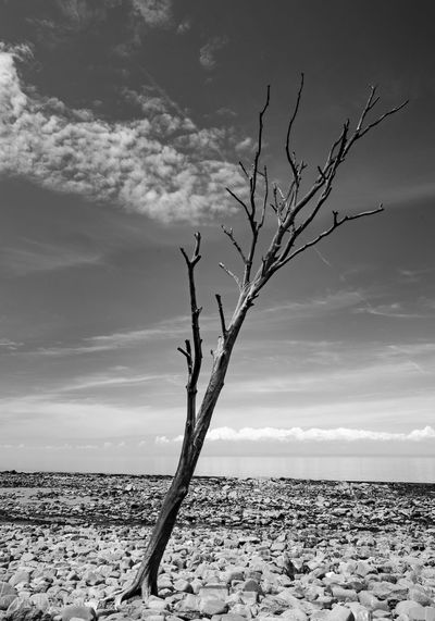 Arid Climate Bare Tree Beach Beauty In Nature Cloud - Sky Dead Plant Environment Horizon Isolated Land Landscape Monochrome monochrome photography Nature No People Non-urban Scene Outdoors Pebble Plant Remote Scenics - Nature Sky Tranquil Scene Tranquility Tree