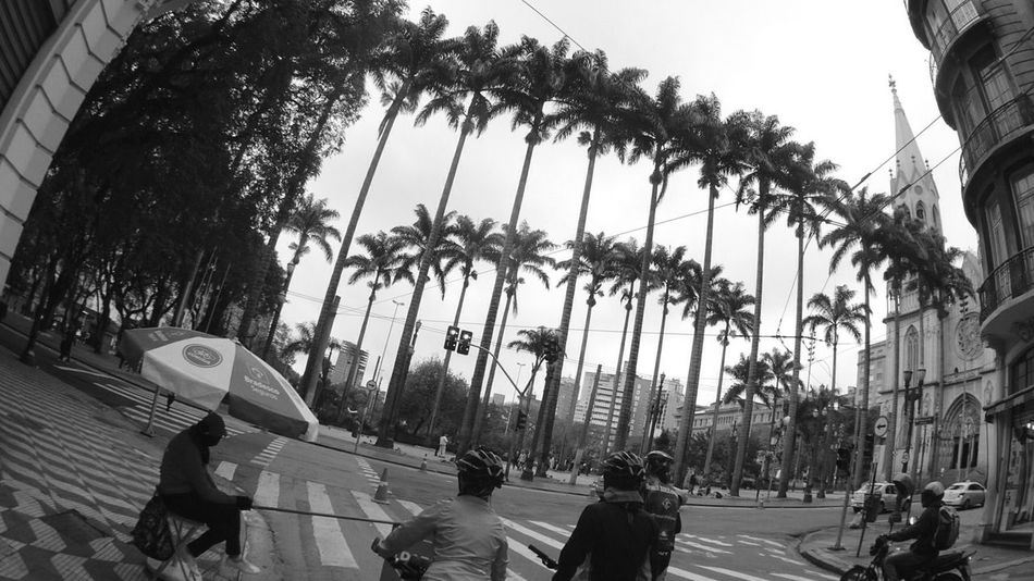 Sport In The City getting fit by bike,in different way ... Special Bike Palm Trees São Paulo