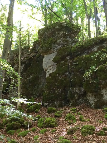 Was Siehst Du? What Do You See? Outdoors Forest Fels No People Rock - Object Wald Kurioses  Kurios Rock Stein Stone Nature Stones