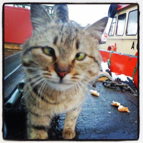 Problem  nedir Gardas Cat sevgi selfie kedi sasi istanbul zeytinburnu bakirkoy benimkarem oan objektifimden animal amonocoracaodopepeito pet