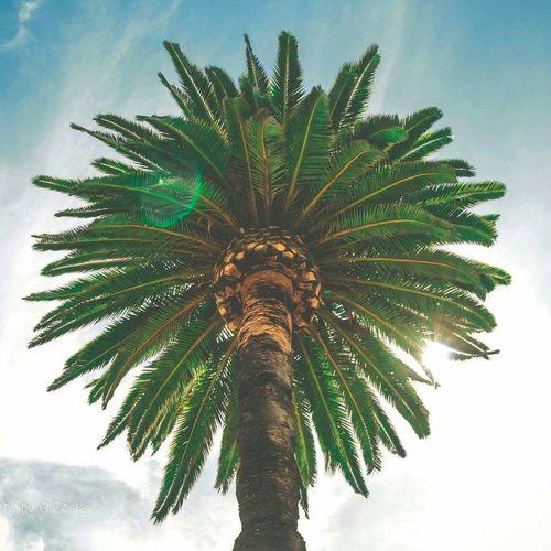 Standing Tall Creative Light And Shadow San Diego Palm Trees California Summer Views