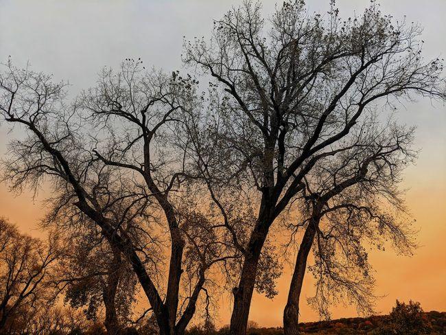 Fall Autumn Tree Bird Branch Sunset Silhouette Sky Single Tree Treetop Long Shadow - Shadow Leaves Change Fallen Fallen Leaf Maple Leaf Patchwork Landscape