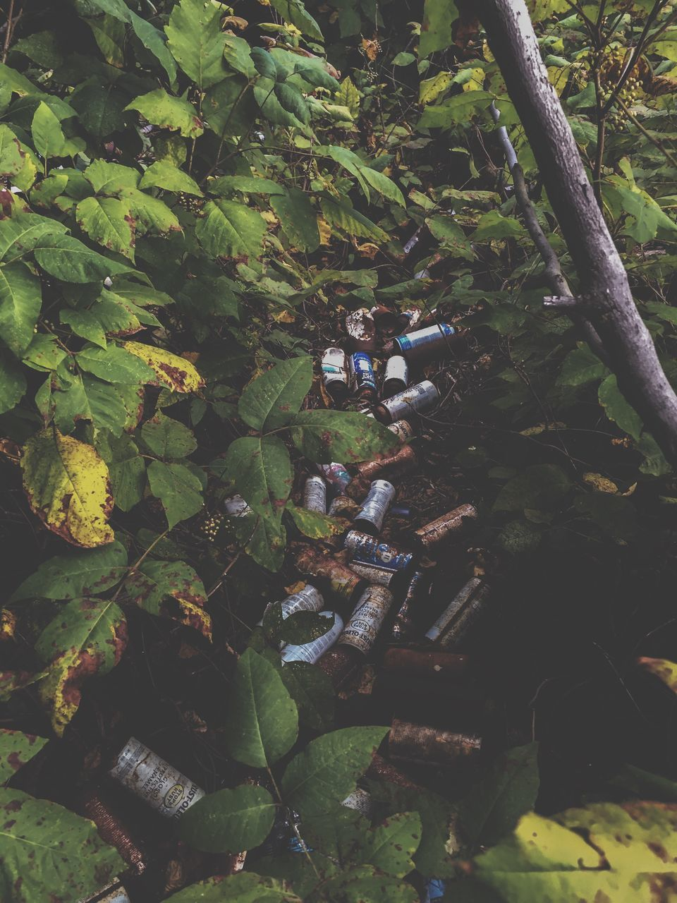 Garbage In A Forest