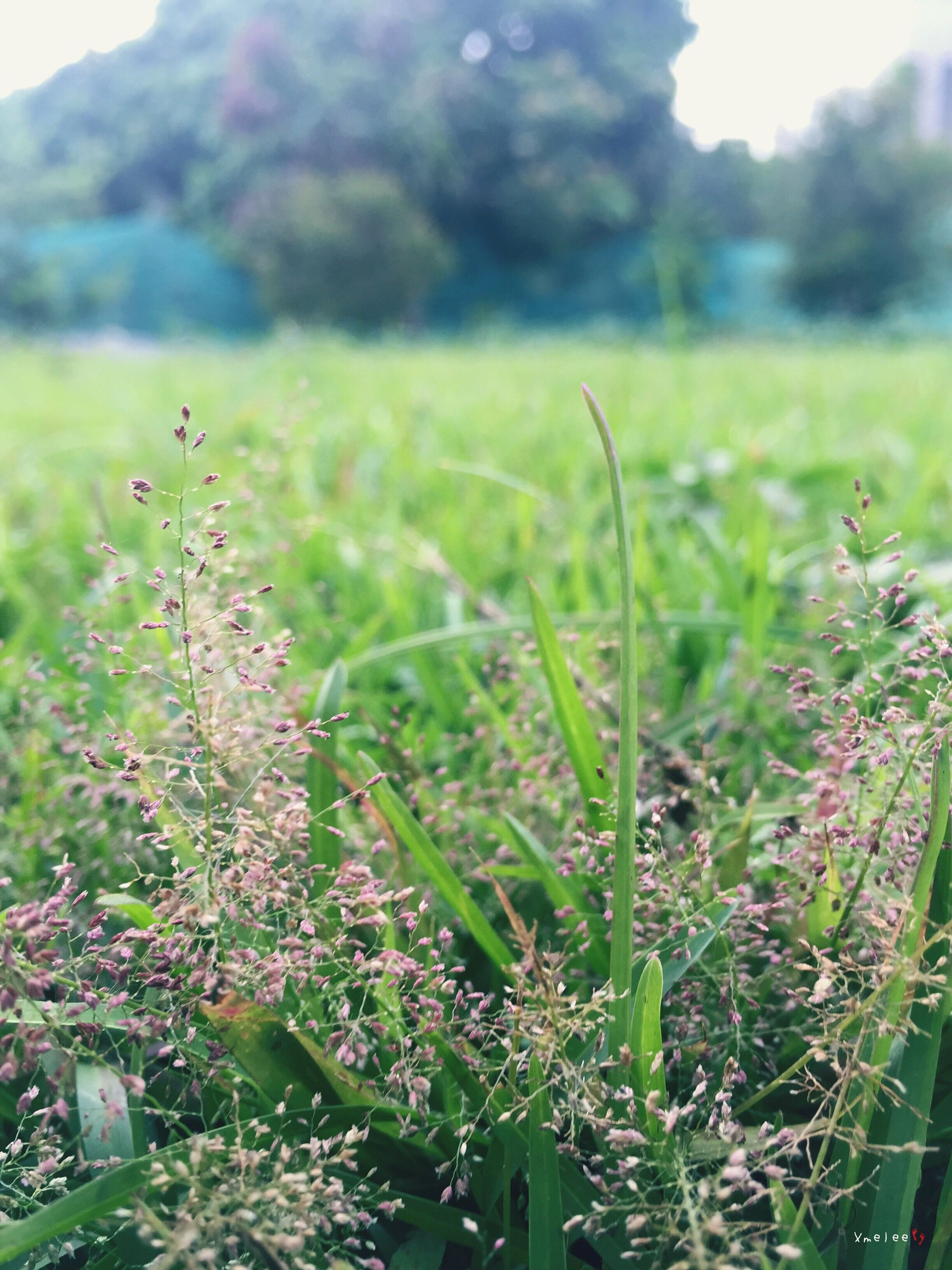 growth, grass, plant, focus on foreground, nature, field, close-up, beauty in nature, green color, tranquility, fragility, flower, selective focus, freshness, growing, day, stem, outdoors, grassy, no people