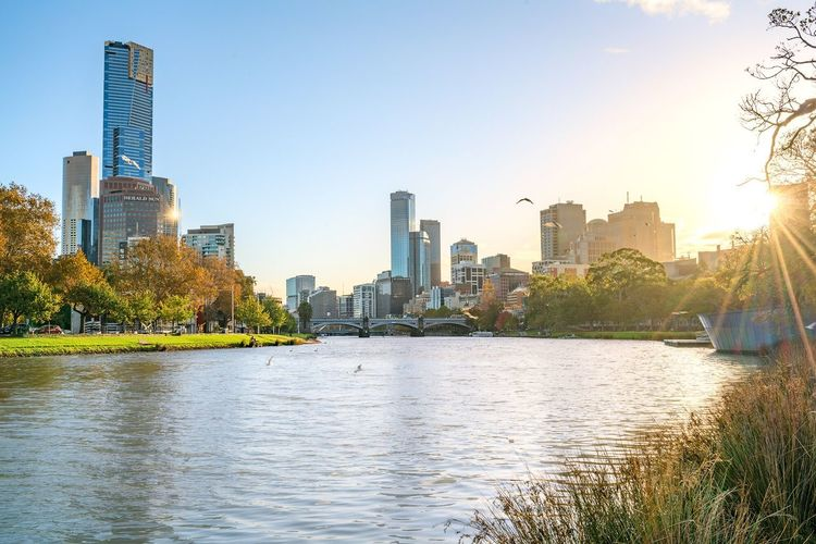 Adapted To The City Nature in Melbourne City Architecture Skyscraper Urban Skyline Building Exterior Modern Sky Water Reflection Clear Sky Outdoors Cityscape Tree Built Structure River No People Downtown District Day