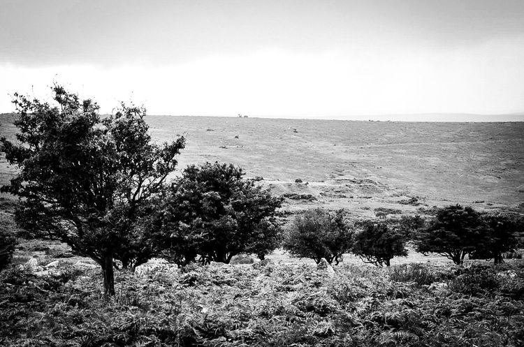 Before the r ain came Hanging Out Taking Photos Check This Out Beauty In Nature Moorland Cornwall Cornwall Uk Landscape AMPt_community For My Friends That Connect No People Trees Bnw_collection Bnw_connection Black And White Scenic Landscapes