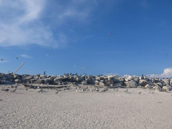 Seagulls flying over land against sky