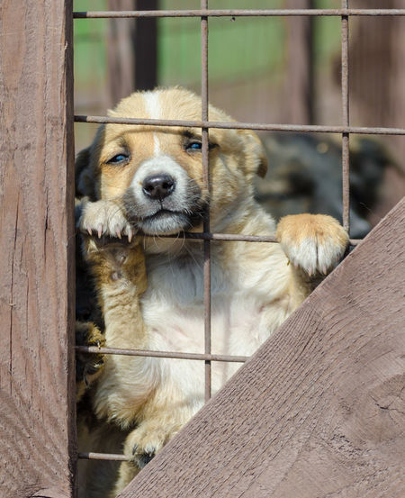 Close-up of dog looking through metal fence