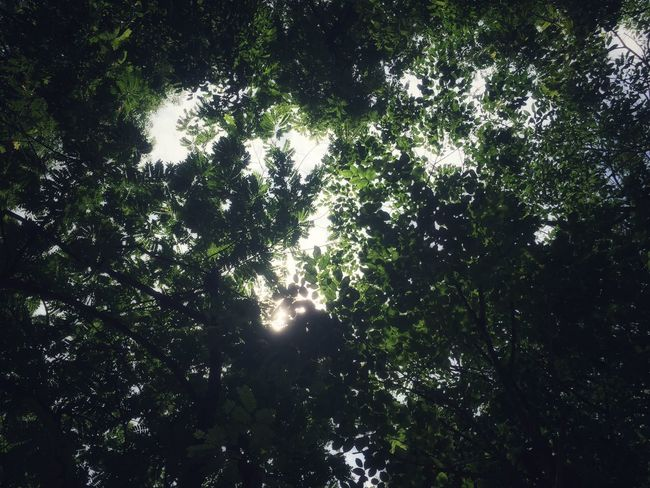 Tree Plant Growth Beauty In Nature Low Angle View Nature No People