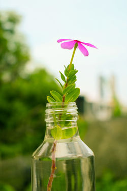 flower in a Jar Green Purple Pink Jar Kaca Botol Rumah Home Bunga Flower Bloom Water Karangan Bunga Dream Beauty In Nature Beautiful Decoration Morning Outdoor Plant Nature Focus On Foreground Flower Leaf Bottle No People Close-up Green Color Flower Head