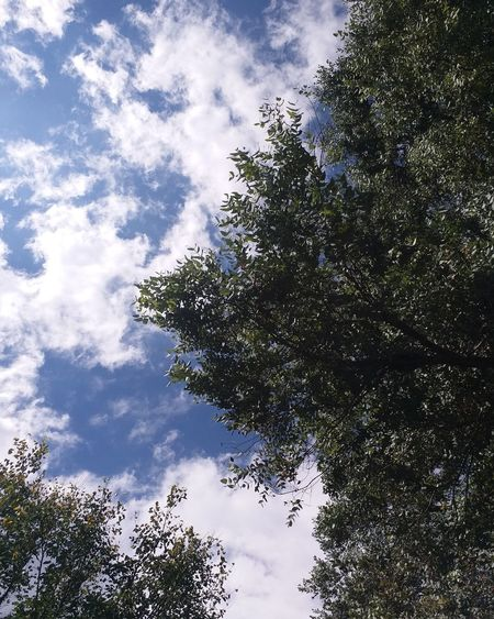 No People Wood Love To Take Photos ❤ No Filter, No Edit, Just Photography Beauty In Nature Nature_collection Nature Plant Leaf 🍂 Natural Beauty Sky And Clouds Skyporn Natureporn Relaxing Tanu Trees .