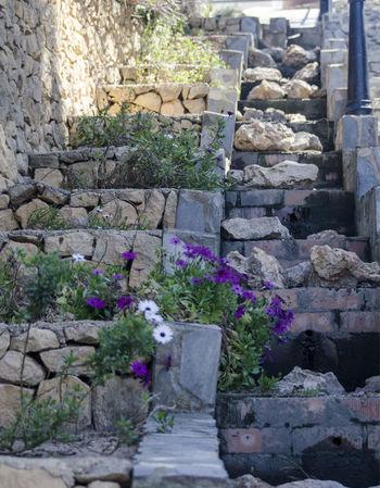 Flower Architecture Plant Built Structure Building Exterior