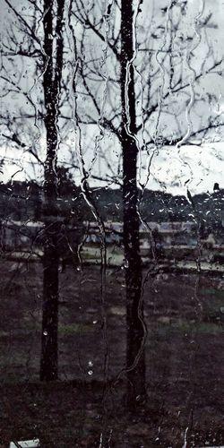 Rainy Day Tree