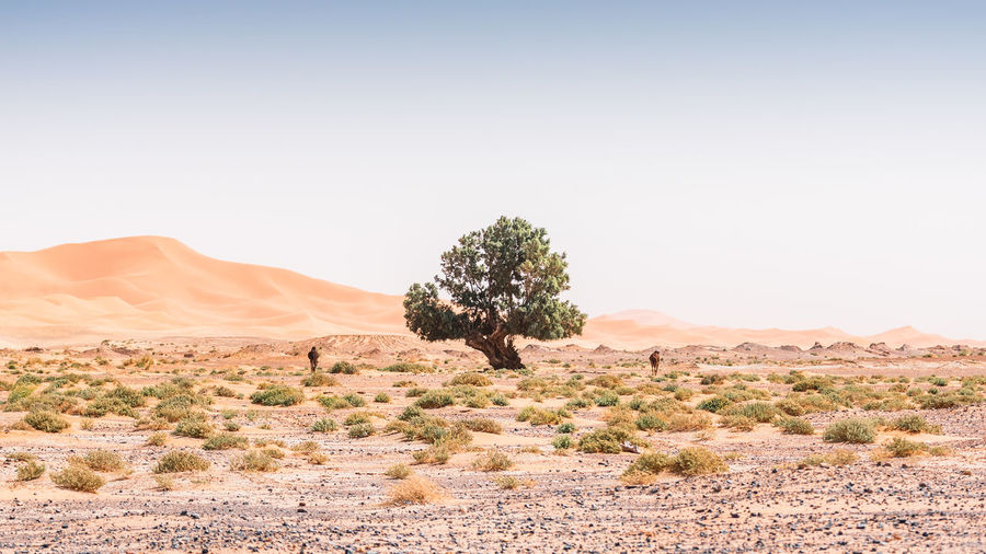 Trees on desert against clear sky in the desert with animals. minimal landscape
