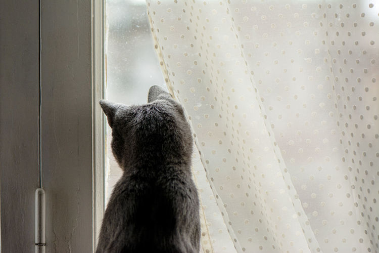 Rear view of cat looking through window