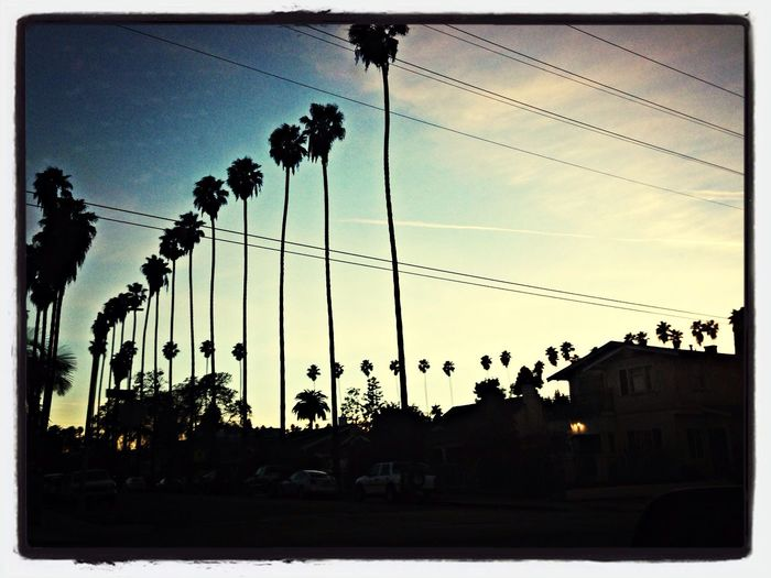 Palm Trees California Check This Out Enjoying The Sun