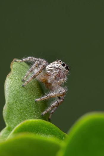 Close-up of spider on leaf