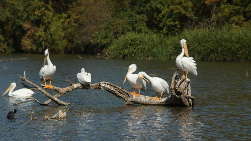 White Road Lake Dallas Texas. Local wildlife.