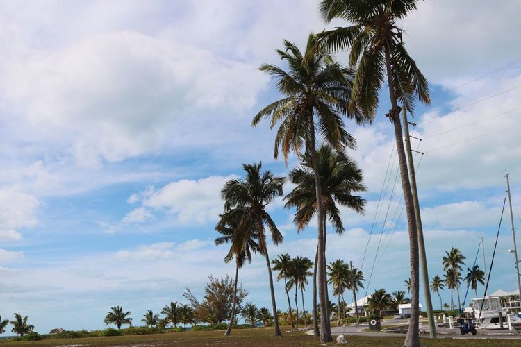 Palm Tree Tree Sky Tree Trunk Scenics Coconut Palm Tree Beauty In Nature Tranquil Scene Tranquility Growth Beach Cloud - Sky Day Outdoors No People Tropical Climate Life Is A Beach Island Islandlife Lifestyles Fun Nature Sea Low Angle View Palm Frond Palm Trees In the Bahamas