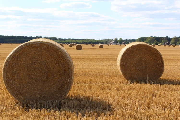 Agriculture Bale  Beauty In Nature Day Farm Field Harvesting Hay Hay Bale Landscape Nature No People Outdoors Rural Scene Scenics Sheaf Of Wheat Sky Tranquil Scene Tranquility